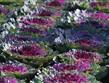 zájezdy Francie - Francie - zámky na Loiře - Villandry, i zelenina může být krásná